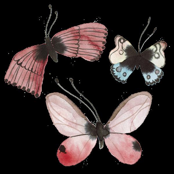 Schmetterlinge Sathya Ranjana
