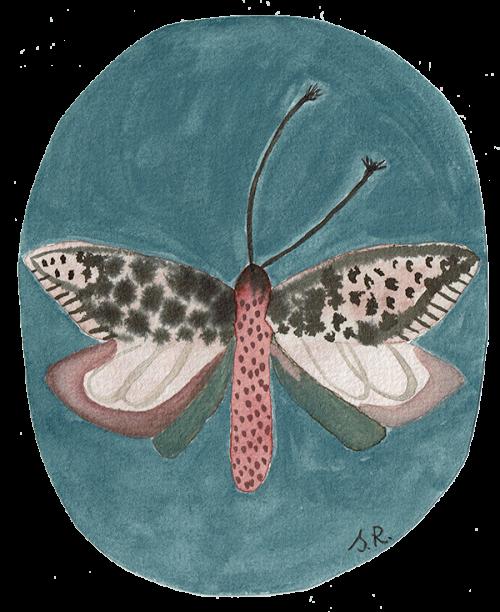 Schmetterling SathyaRanjana